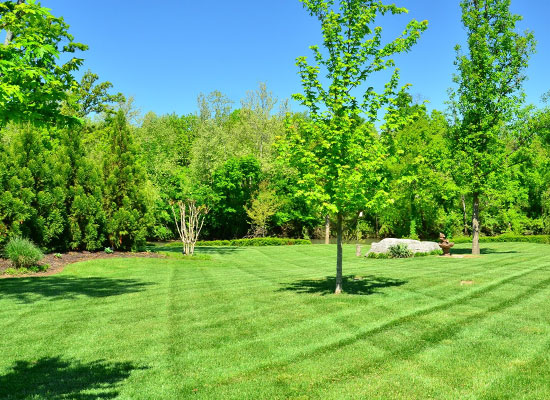 Lawn Care Services Fargo ND Moorhead MN